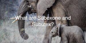 Suboxone or Rehab?