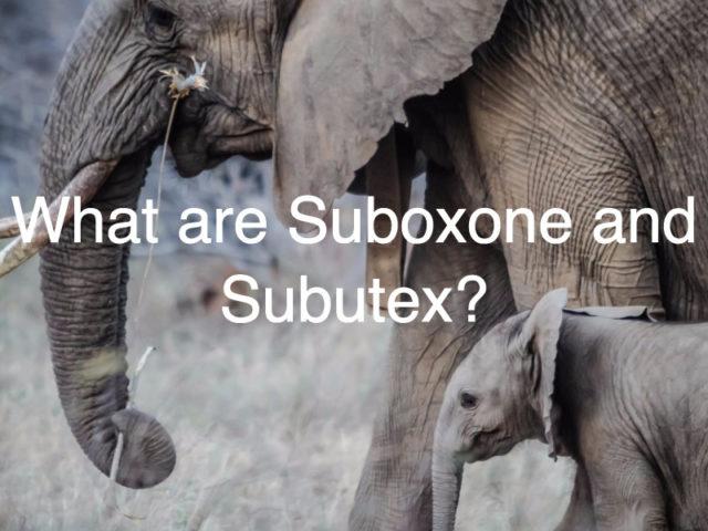 Suboxone or Rehab